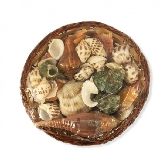 A Basket Of Assorted Sea Shells And Snails